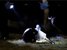 Ferguson Helmet